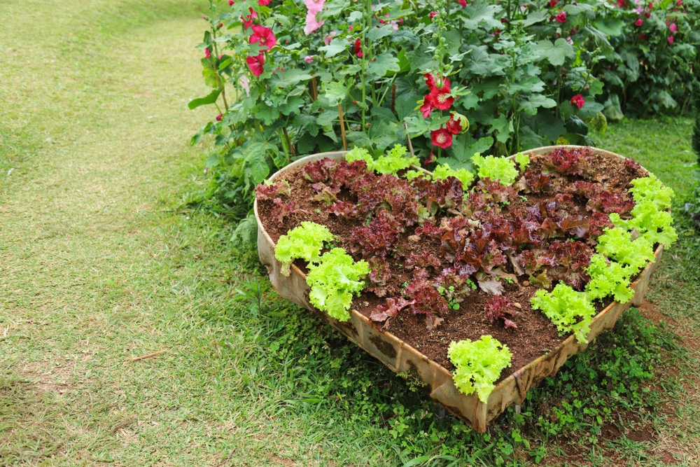 gardening and heart health